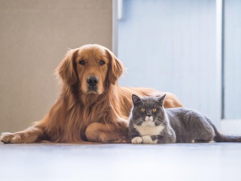 La satisfacción de ayudar a los animales