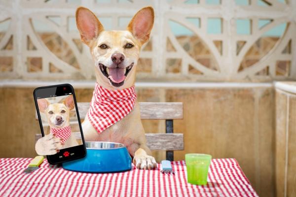 Restaurantes que admiten perros