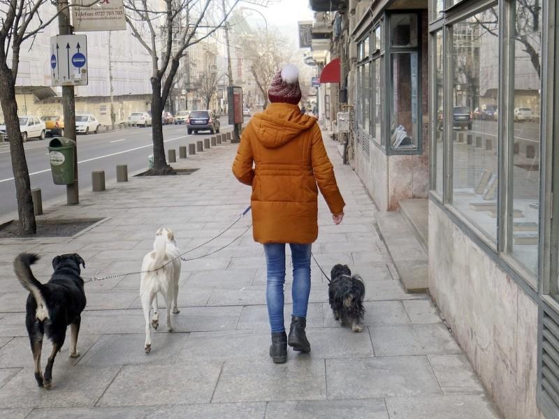 Tiendas que admiten perros